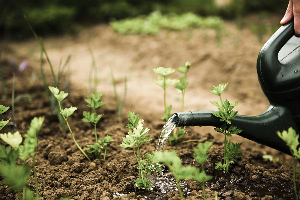 Kiedy warto kupić ekologiczne warzywa i owoce, a kiedy to zwykła strata kasy?