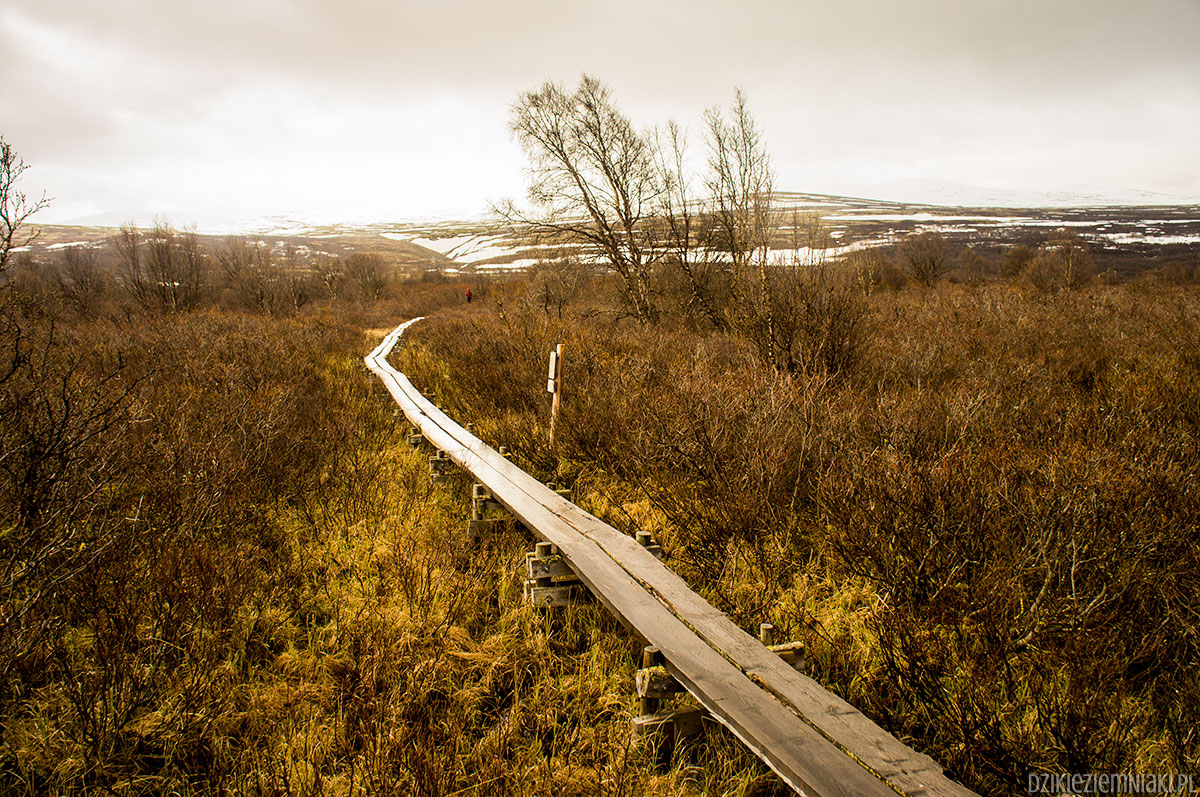 Fotorelacja z Norwegii #1: przyroda