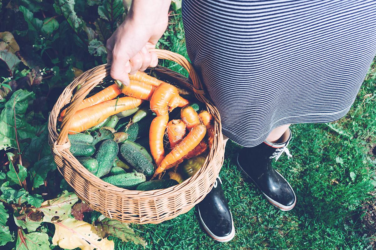 Brudna 12 i Czysta 15 warzyw i owoców + kieszonkowa lista do druku