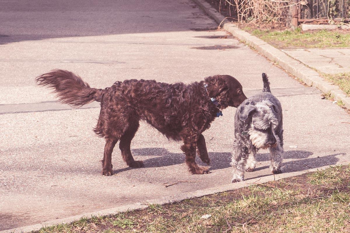Tylko na zewnątrz Idealny pies dla dzieci - jak dobrze wybrać psa ze schroniska US56